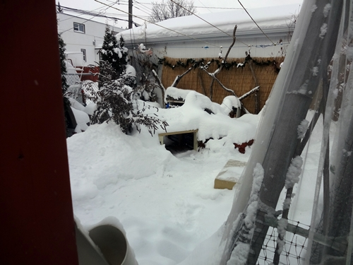 In, Through, On and Under - Outdoor Babies in Snow (1/5)