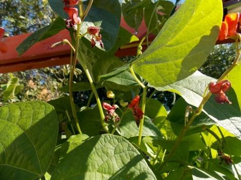 14-09-beans02