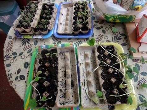 15-06-planting02
