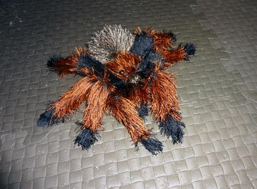 16-06-spider02