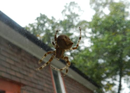 16-06-spider04
