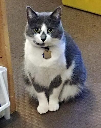 18-05-cat