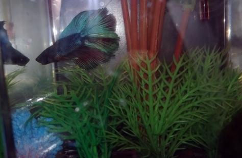 18-10-fish01