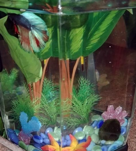 18-10-fish02